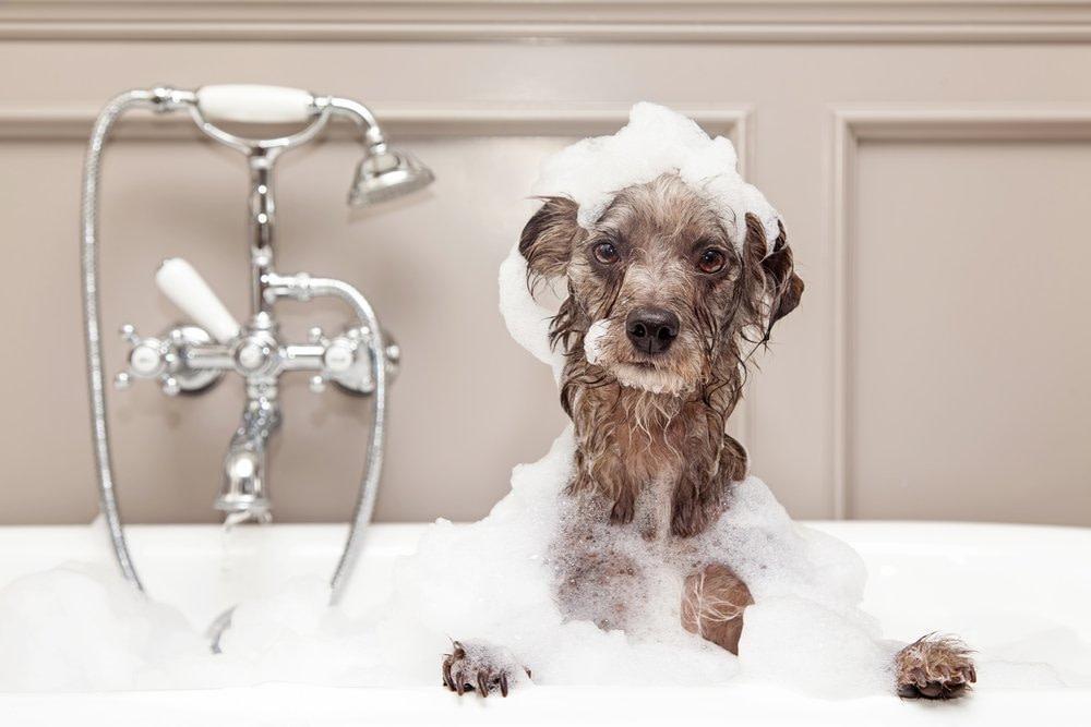cute dog in bathtub