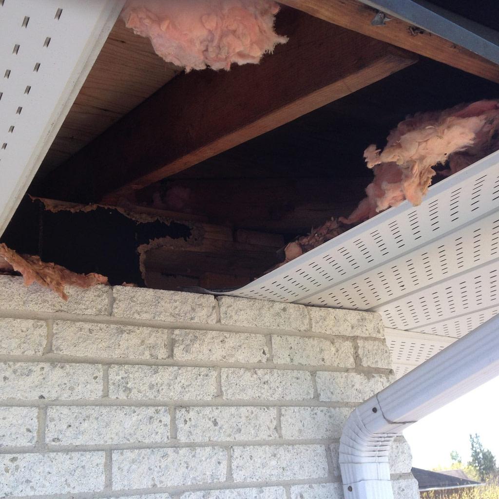 raccoon damage at soffit