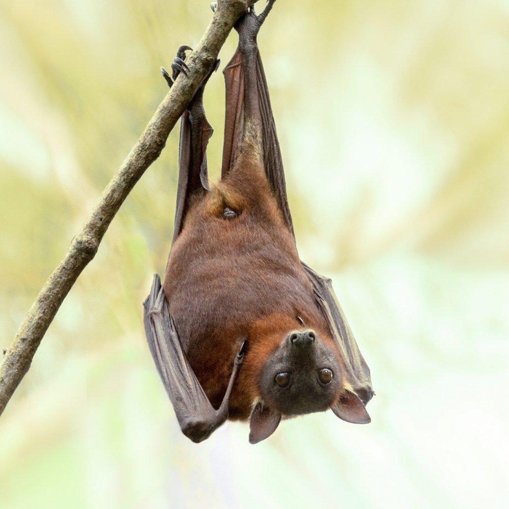 bat removal service