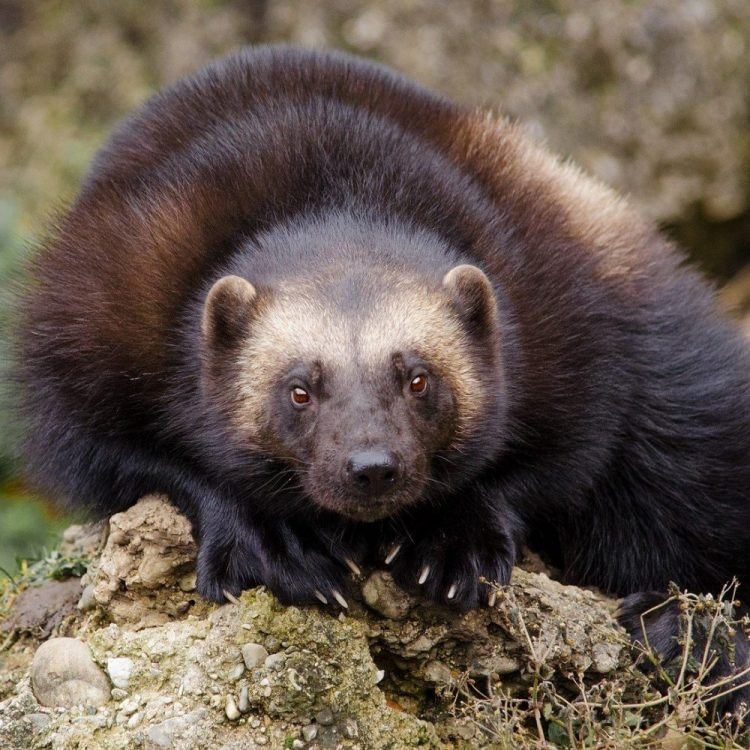 marten-fisher removal services